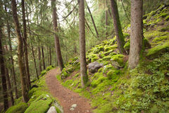 Camminando nella foresta in un giorno nuvoloso Fotografie Stock Libere da Diritti