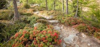 Camminando nella foresta in un giorno nuvoloso all'autunno Nessuna gente intorno Immagini Stock Libere da Diritti