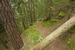 Camminando nella foresta in un giorno nuvoloso all'autunno Nessuna gente intorno Fotografie Stock Libere da Diritti