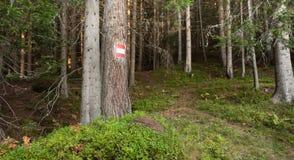 Camminando nella foresta in un giorno nuvoloso Nessuna gente intorno Immagine Stock