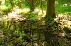 Camminando nella natura calma della molla è inestimabile fotografia stock