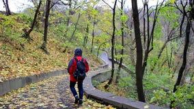 Camminando nella sosta di autunno archivi video