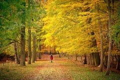Camminando nella sosta di autunno Fotografie Stock Libere da Diritti