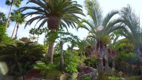 Camminando sotto gli alberi di Plam a Tenerife stock footage