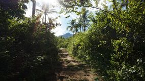 Camminando su una traccia con la montagna in vista immagini stock