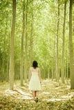 Camminando sul legno Immagine Stock Libera da Diritti