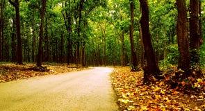 Camminando sul percorso delle nature Immagine Stock