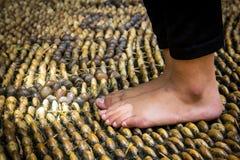 Camminando sul percorso di reflessologia Fotografia Stock Libera da Diritti
