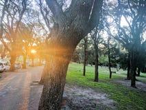 Camminando sul sentiero per pedoni che vede gli alberi della depressione del sole Fotografia Stock Libera da Diritti