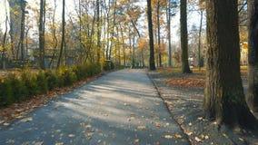 Camminando sul vicolo del parco nel giorno soleggiato di autunno stock footage