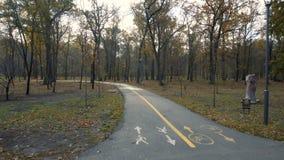 Camminando sul vicolo del parco nel giorno soleggiato di autunno video d archivio