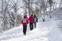 Camminando sulla foresta della neve Fotografia Stock Libera da Diritti