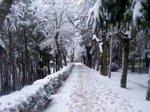 Camminando sulla neve Immagine Stock Libera da Diritti