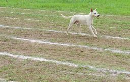 Camminando sulle linee bianche pista Fotografie Stock
