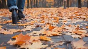Camminando tramite i fogli di autunno archivi video