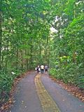 Camminando in una riserva della foresta Immagini Stock Libere da Diritti