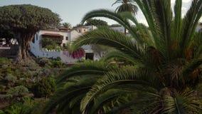 Camminando vicino alla più vecchia dracena delle Canarie all'isola di Tenerife stock footage