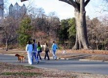 Camminare del cane Fotografia Stock