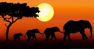 Camminare della famiglia dell'elefante Fotografia Stock