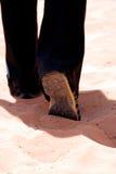 camminare della sabbia Immagini Stock