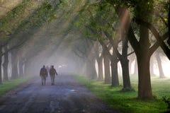 Camminare di mattina 2 Immagini Stock
