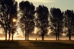 Camminare di mattina sole 1 Immagini Stock Libere da Diritti