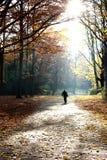 camminare maggiore dell'uomo di vita di autunno Immagini Stock Libere da Diritti