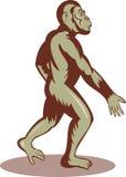 Camminare preistorico della scimmia dell'uomo Immagine Stock
