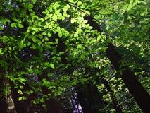 Camminata 3 della foresta Fotografia Stock