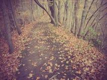 Camminata attraverso il legno fotografia stock libera da diritti