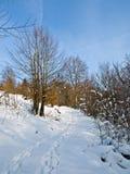 Camminata attraverso la neve Fotografia Stock