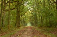 Camminata in autunno Fotografie Stock Libere da Diritti