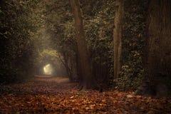 Camminata d'autunno Fotografia Stock