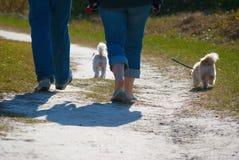 Camminata del cane della traccia di natura Fotografie Stock