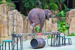 Camminata dell'elefante sul fascio di equilibrio Immagine Stock Libera da Diritti