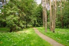 Camminata della foresta Fotografia Stock Libera da Diritti