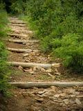 Camminata della foresta Fotografia Stock