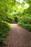 Camminata della foresta Immagini Stock Libere da Diritti