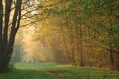 Camminata della foresta di mattina Fotografie Stock Libere da Diritti