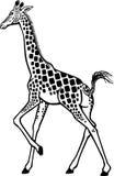 Camminata della giraffa Fotografia Stock Libera da Diritti