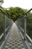 Camminata della parte superiore dell'albero immagini stock libere da diritti