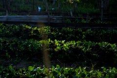 Camminata della ragazza del cetriolo Fotografia Stock