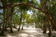 Camminata della spiaggia Immagine Stock