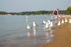 Camminata della spiaggia della famiglia del gabbiano Fotografia Stock Libera da Diritti