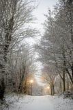 Camminata dello Snowy Immagini Stock