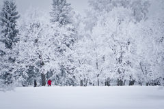 Camminata di inverno Immagini Stock