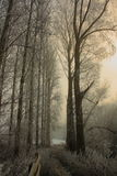 Camminata gelida Fotografie Stock Libere da Diritti