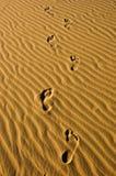 Camminata nel deserto Fotografia Stock