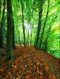 Camminata nel legno Immagini Stock