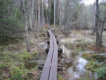Camminata nel legno Fotografia Stock